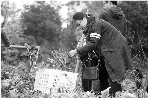杭州一大学农学院下地种菜成必修课:种不出萝卜番薯毕不了业-激流网