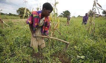 穆加贝总统的津巴布韦土地改革触动了谁的利益?-激流网