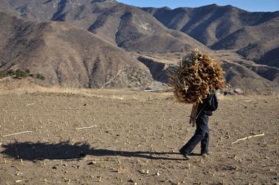 """不要让农民的""""退路""""成为""""死路""""-激流网"""
