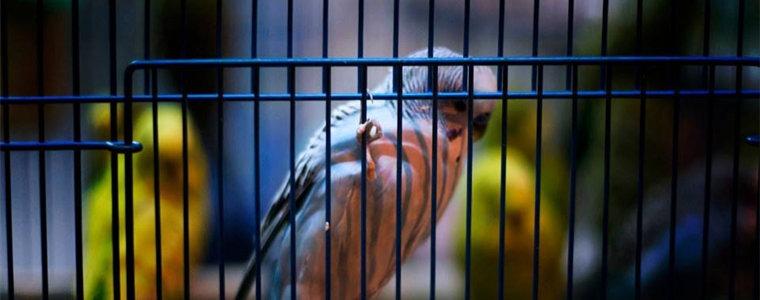 陆经纬:我是飞不出囚笼的鸟