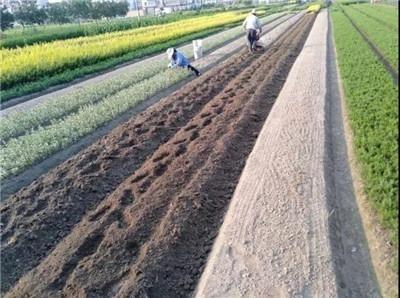 ��ʢ��Ʊ����app_城边异乡人:一个苗工的杭州二十年-激流网